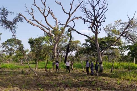 Police and NFA officials tour part of Mt Kei Central Forest Reserve, which was cleared for farming by the encroachers on Wednesday. PHOTO   RASHUL ADIDI