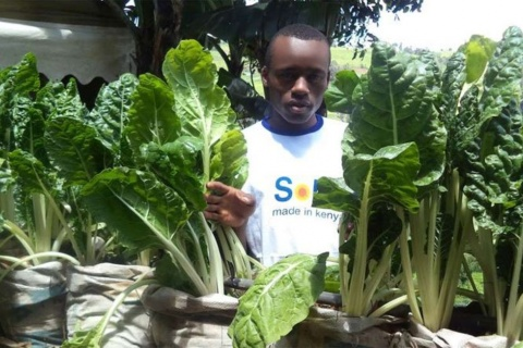 Kenyan youth are turning to farming. FILE PHOTO | NMG