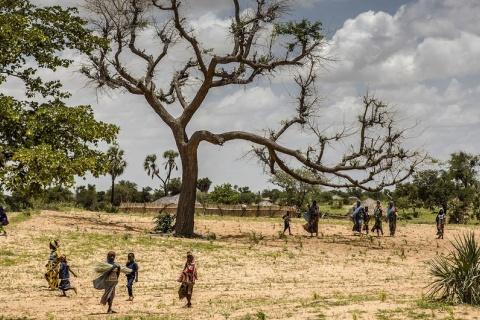 Foto: © FAO/Luis Tato