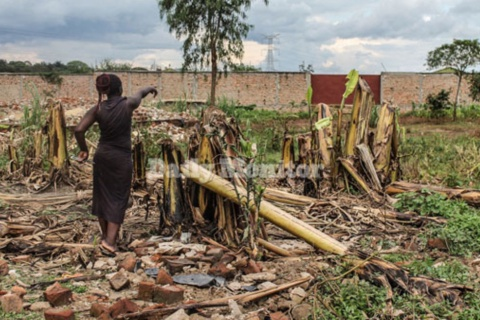 A garden that was destroyed on a contentious piece of land in Lusanja, Kasangati Town Council in Wakiso District on October 29,2018. PHOTO/ FILE