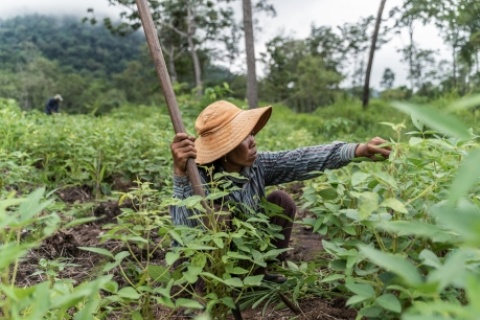 La région dans laquelle vit Tun Kean a été durement touchée par la déforestation, mais les membres de sa communauté se sont unis pour riposter, restaurer leur environnement et accroître leurs moyens de subsistance. ©FAO/Enric Català Contera