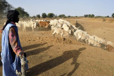 pastoralisme.jpg