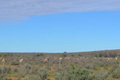 Rangelands grazing pressure under the spotlight image