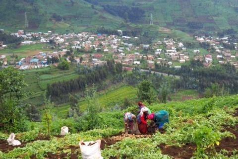 Medici Land partners with Rwandan government for blockchain land registry