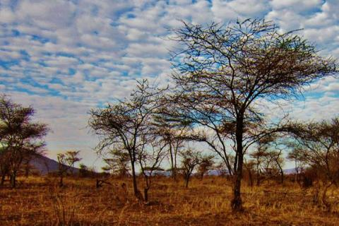 tanzania-landscape-serengeti-np.jpg
