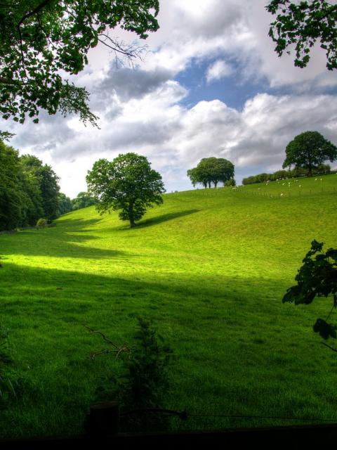 landscape-403165_1280.jpg