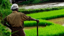 India_land_ricefield