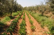 agriculture_tunisia.jpg